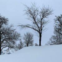 Tief verschneite Landschaft: Bäume auf einem Bergrücken.